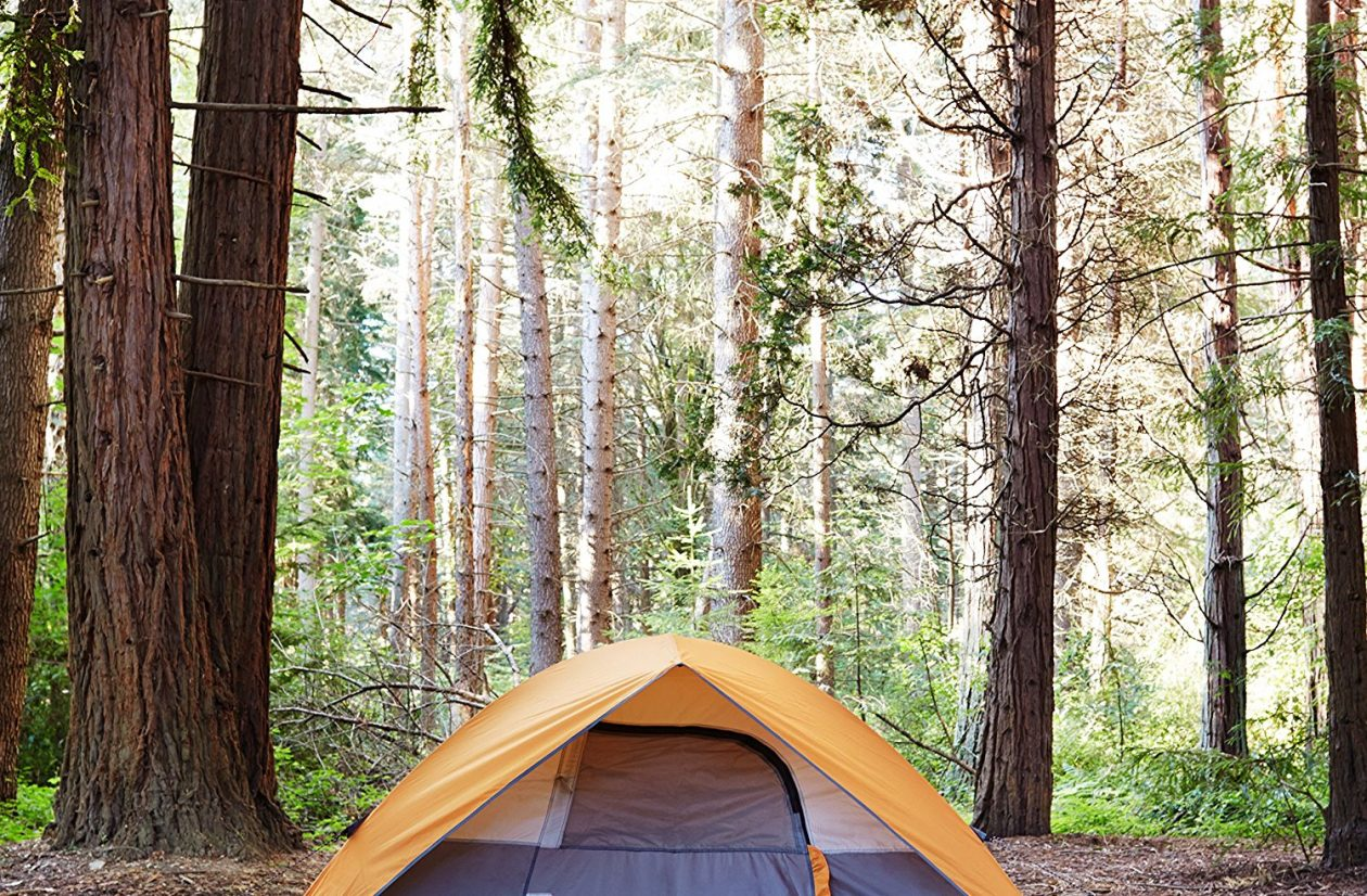 amazon basics tent
